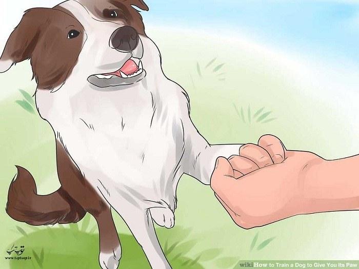 منتظر ماندن برای دست دادن سگ