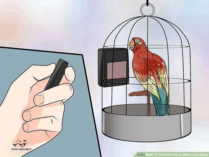 کمک گرفتن از نور برای آموزش طوطی