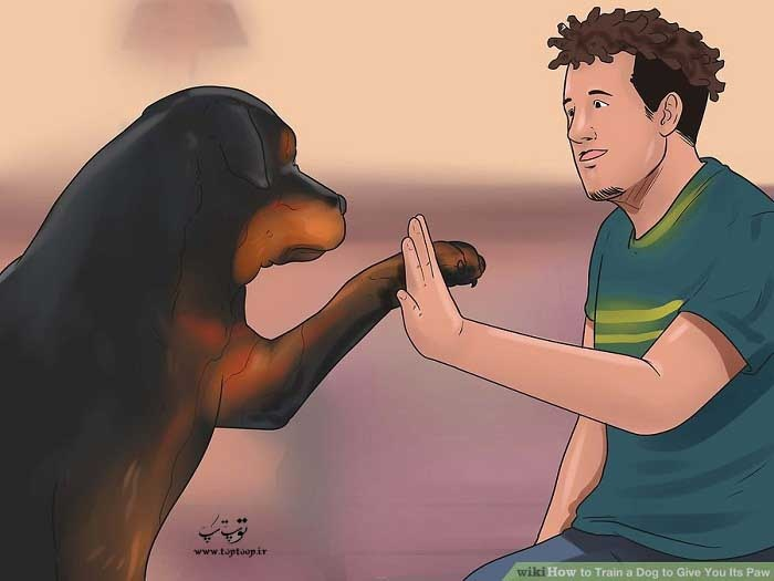 استفاده از اشارات کلامی برای آموزش دست دادن سگ