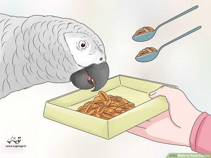 چگونه به طوطی خود غذا بدهیم