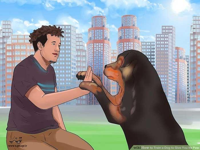 به چالش کشیدن سگ برای آموزش دست دادن