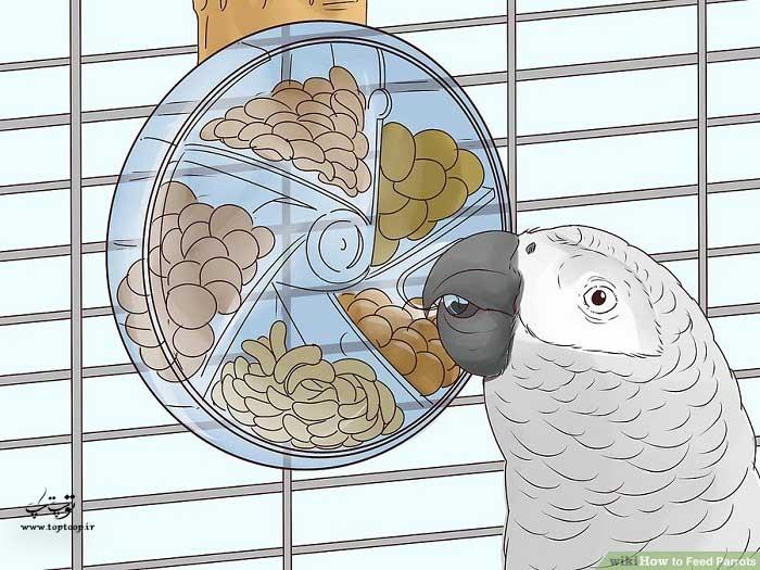 طوطی را تشویق به جستجو کردن کنید