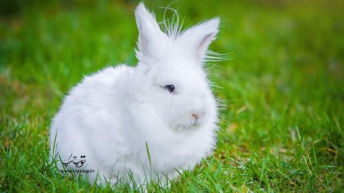 معرفی اسم برای خرگوش های پسر (نر)