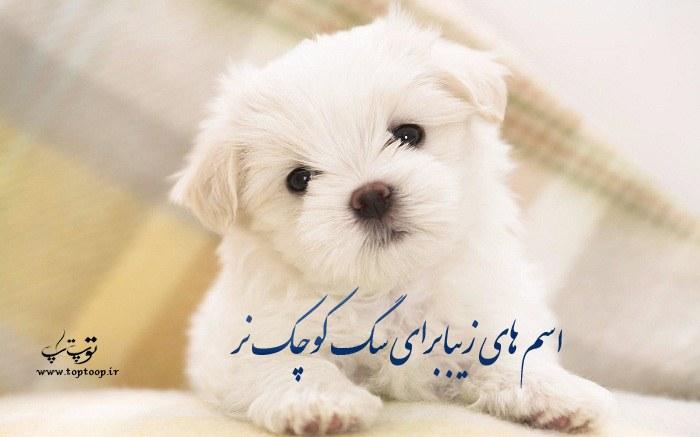 اسم های شیک و زیبا برای سگ های کوچک نر