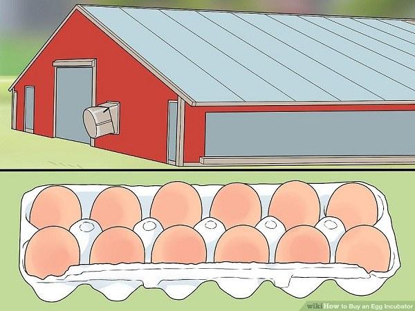 نحوه خرید دستگاه جوجه کشی تخم مرغ