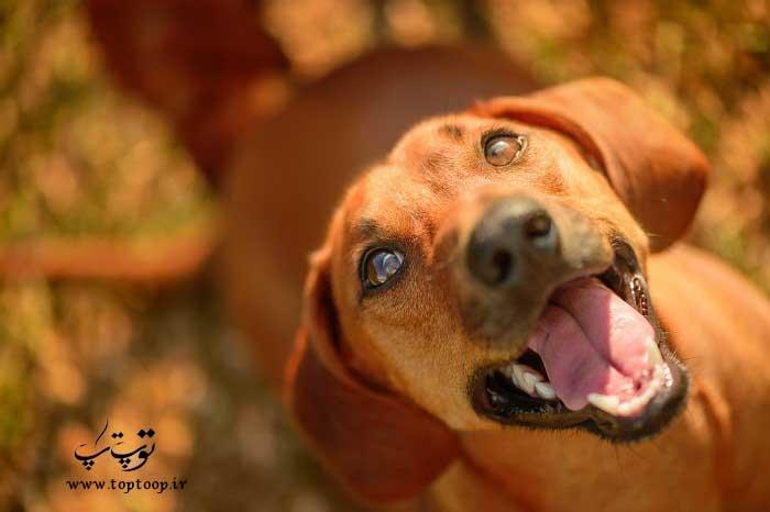 روش های خوشحال کردن سگ