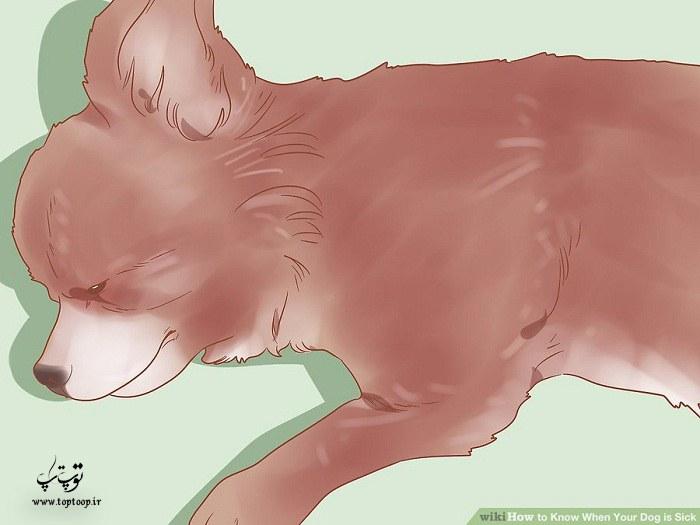 چگونه بفهمیم سگ مریض است