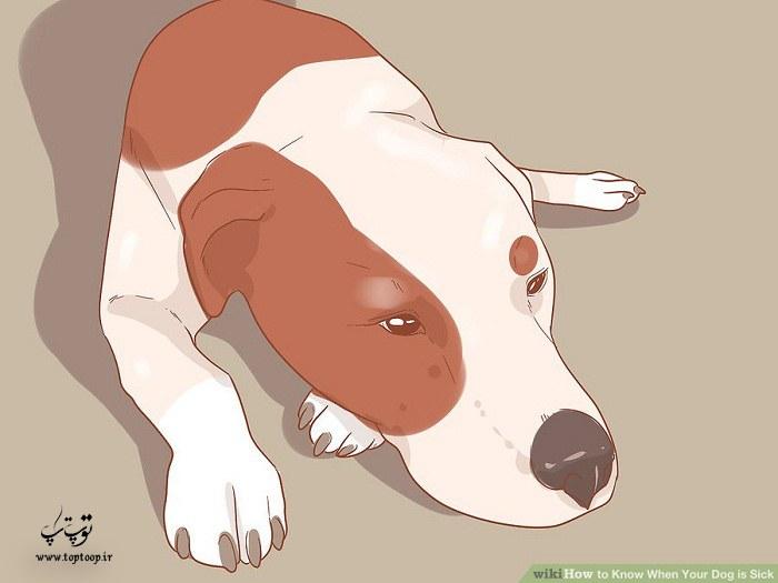 پی بردن به مریضی سگ