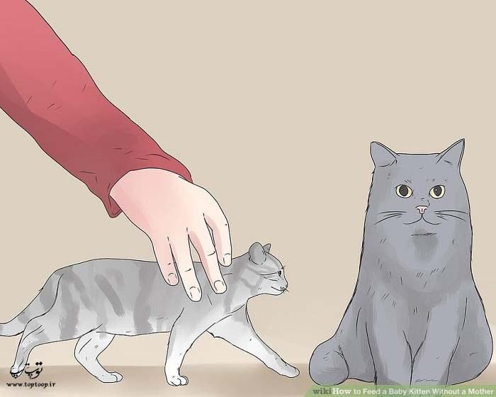 جدا نکردن بچه گربه از مادرش