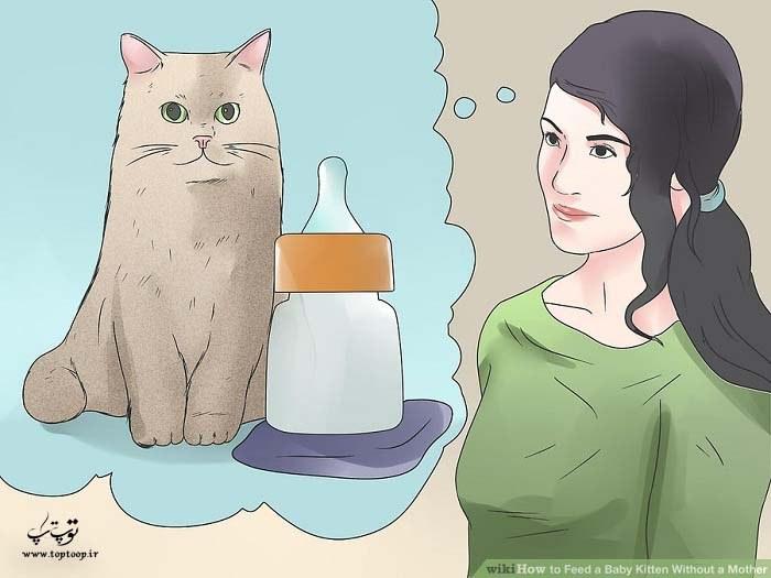 نحوه تغذیه بچه گربه بدون مادر