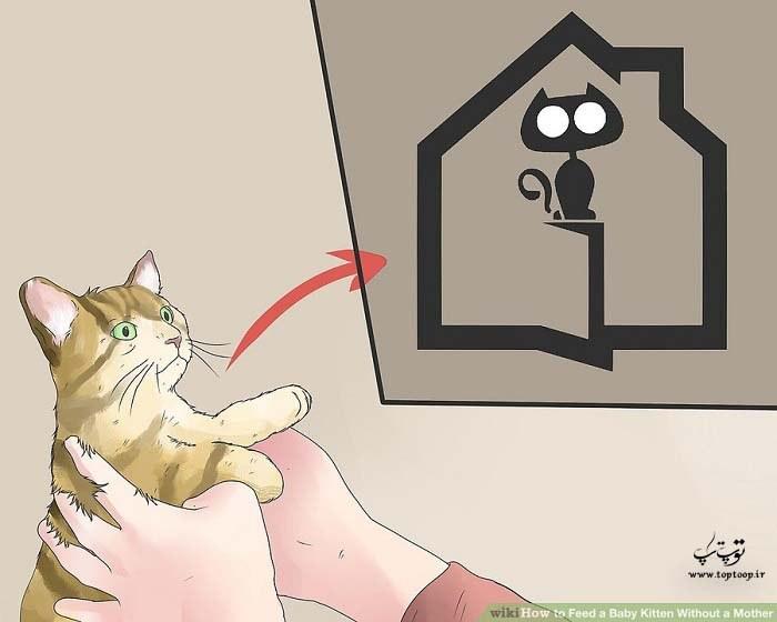 نحوه تغذیه بچه گربه بدون مادر ، نکات مهم تغذیه بچه گربه بی مادر