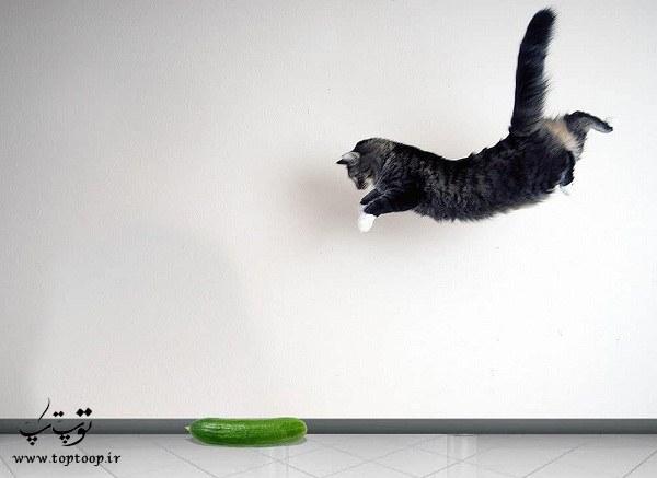 چرا گربه از خیار می ترسد