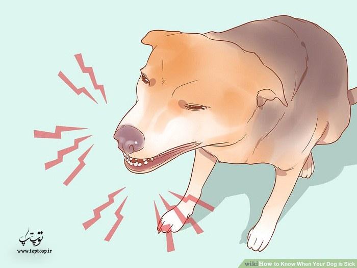 از کجا بفهمیم سگ مریض است