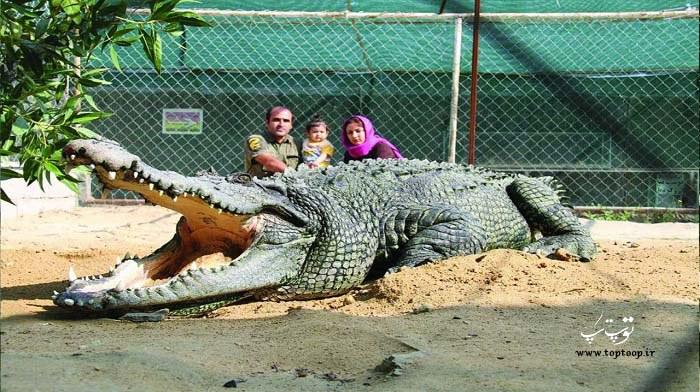 عکس کروکودیل در باغ وحش