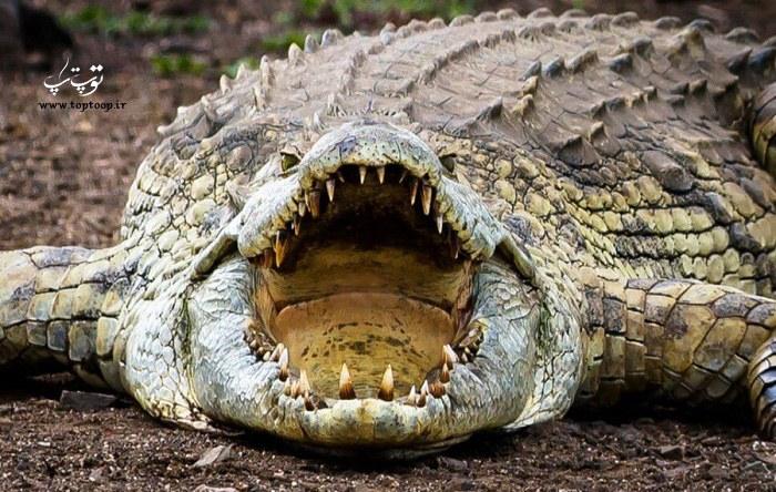 عکس از خشم تمساح