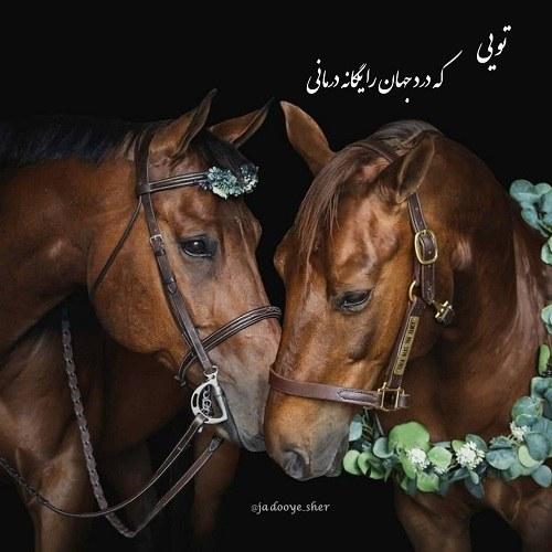 عکس عاشقانه از دو اسب