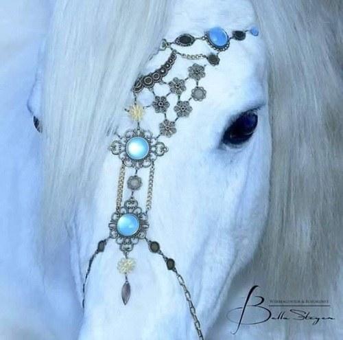 عکس اسب سفید در طبیعت برای پروفایل