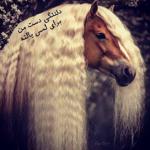 عکس قشنگ ترین اسب های دنیا
