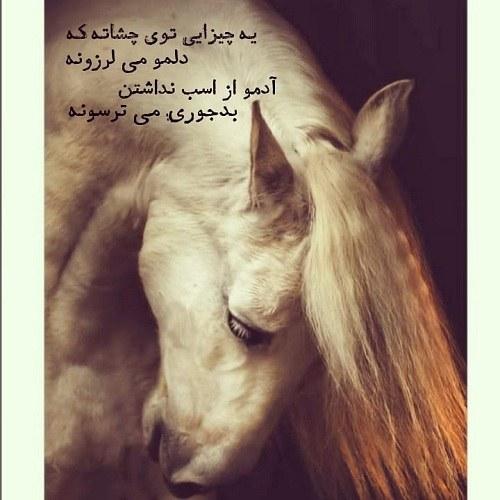 آلبوم عکس اسب 1400 جدید