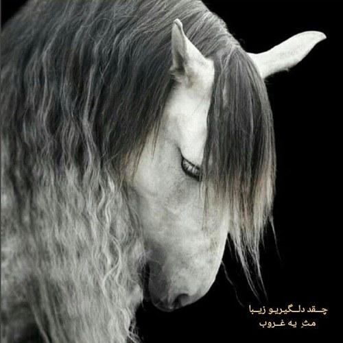 عکس پروفایل غمگین اسب