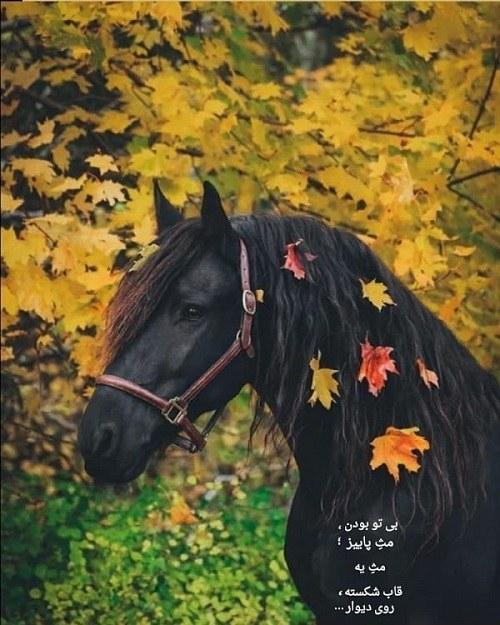 عکس اسب در پاییز