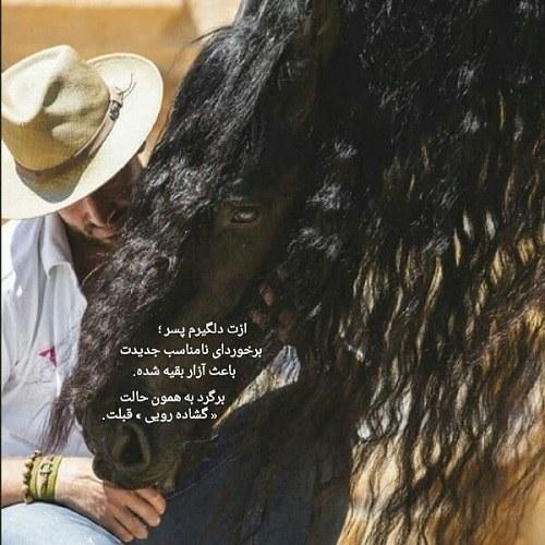 عکس پروفایل زیباترین اسب جهان