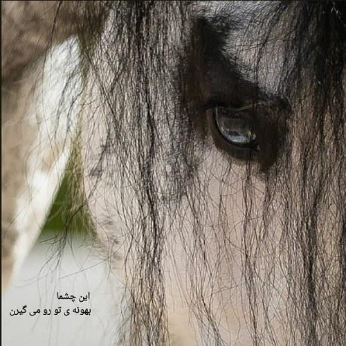 پروفایل زیبای اسب