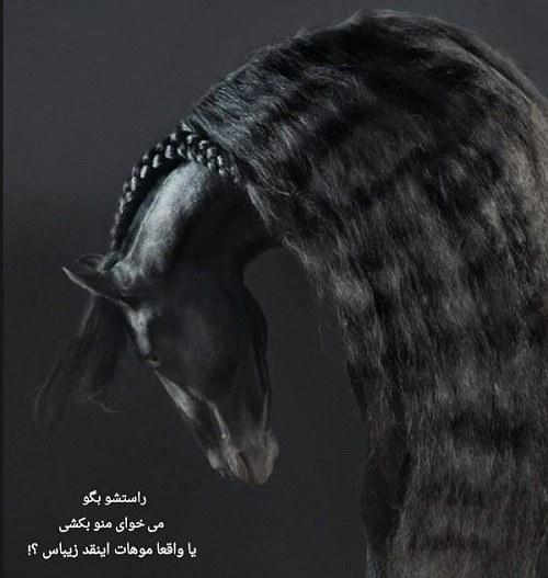 عکس اسب با موهای بلند و مشکی زیبا