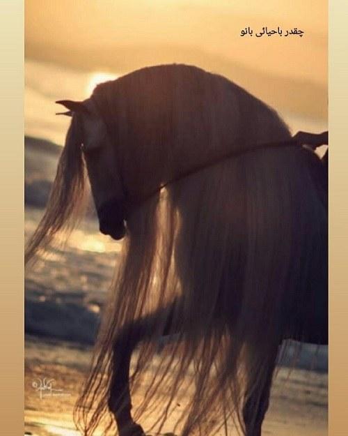 عکس اسب و غروب آفتاب