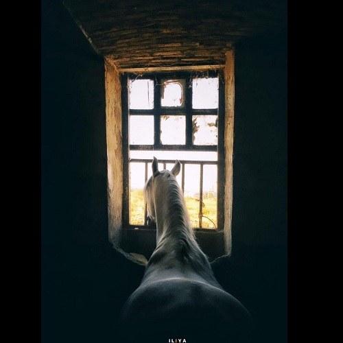 عکس اسب برای وضعیت واتساپ