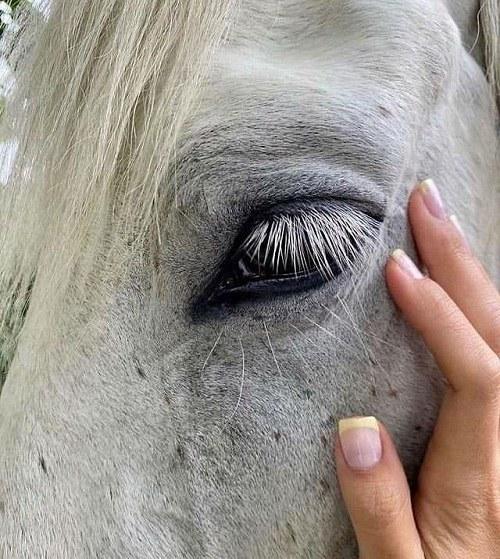 دانلود عکس چشم اسب