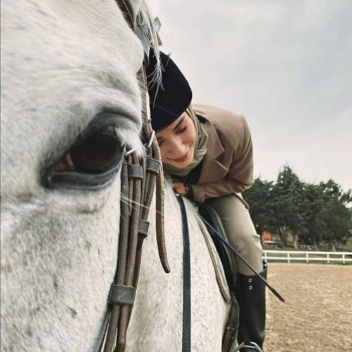 عکس اسب زیبا 2022 جدید
