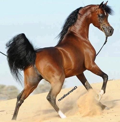 عکس اسب قهوه ای روشن