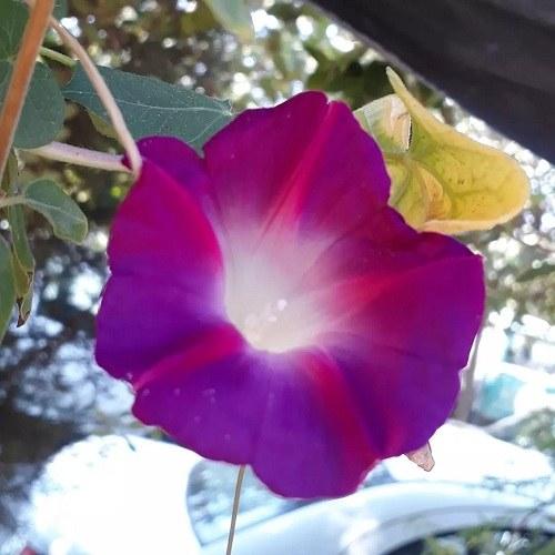 عکس طبیعت زیبا برای پروفایل ، عکس پروفایل منظره بدون متن