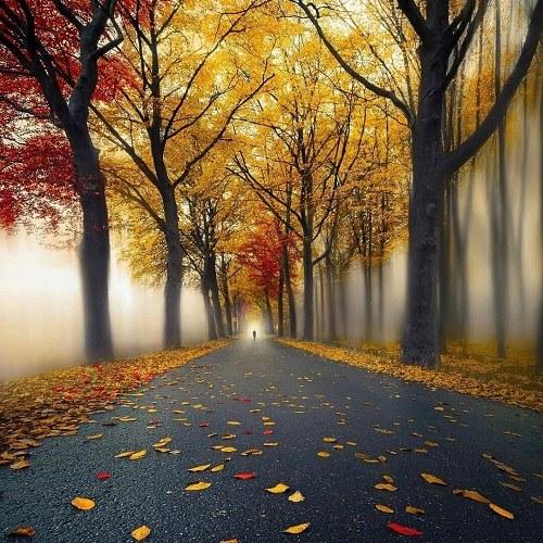تصویر منظره برای پروفایل ، گالری عکس طبیعت ، دانلود تصاویر منظره