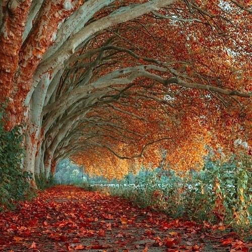 عکس طبیعت رویایی با کیفیت بالا ، منظره زیبا برای وضعیت
