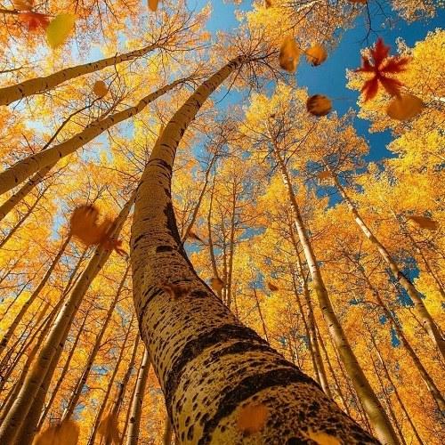 عکس زیبا طبیعت برای پروفایل ، منظرهای قشنگ