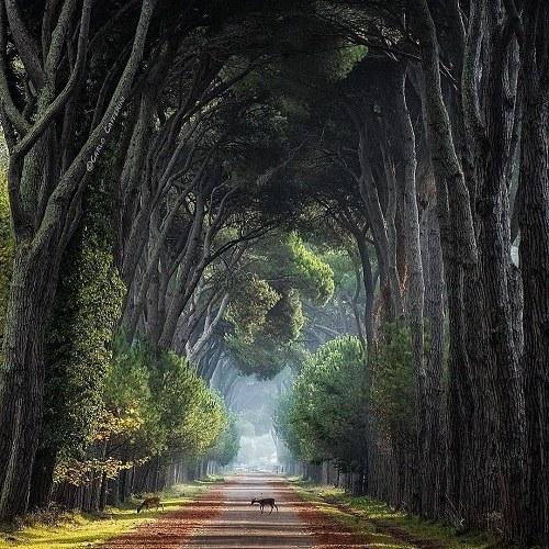 زیباترین مناظر جهان با کیفیت بالا ، طبیعت منظره عکس گل برای پروفایل واتساپ