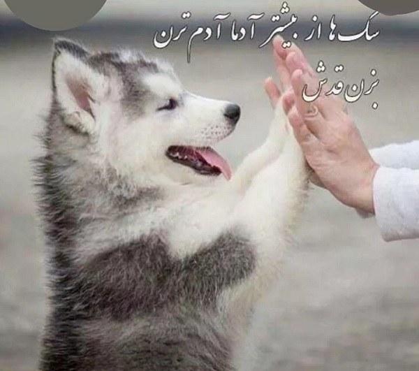 عکس نوشته راجب وفاداری سگ