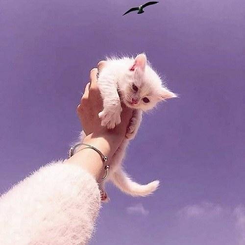 عکس دختر و گربه فانتزی برای پروفایل