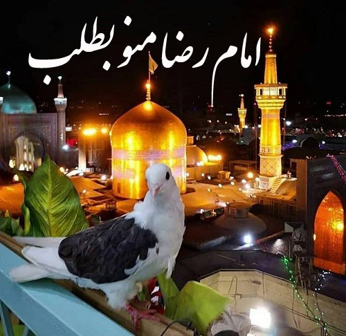 عکس نوشته امام رضا منو بطلب