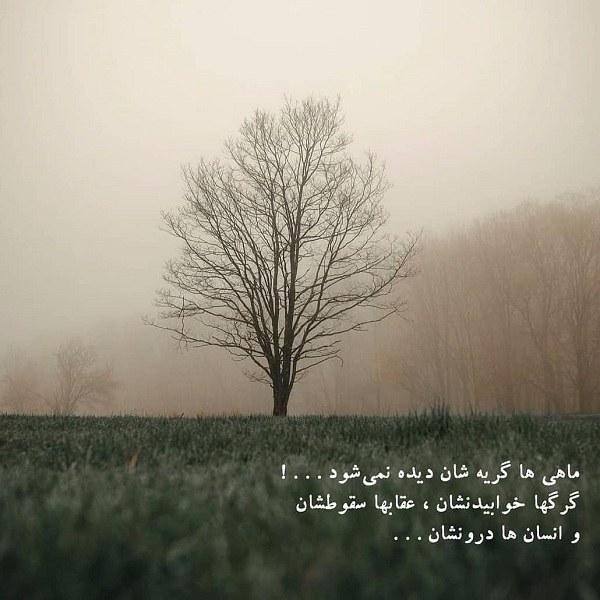 عکس نوشته دلنوشته گرگ