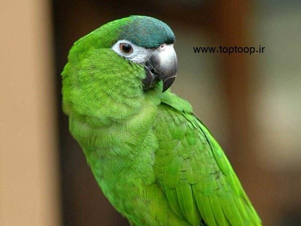 تعبیر خواب طوطی در حال پرواز کردن