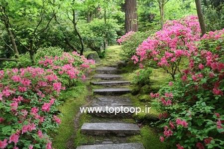 باغ زیبا و سرسبز