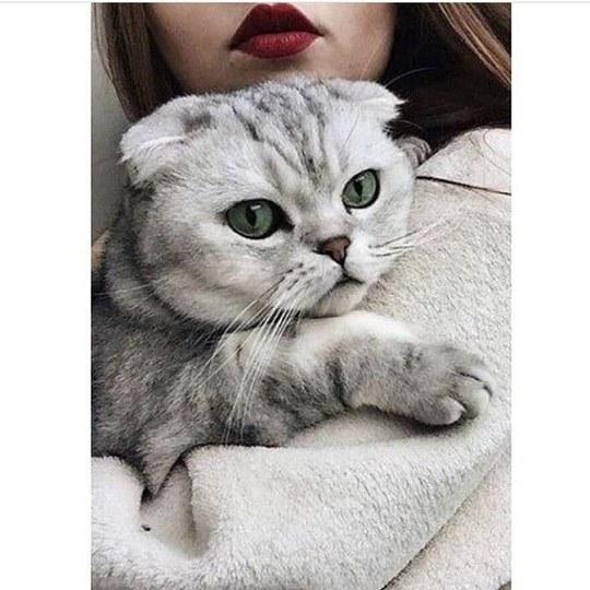 عکس از دختر همراه با گربه ی زیبای خانگی