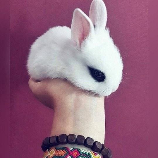 عکس خرگوش دخترونه مینیاتوری برای پروفایل