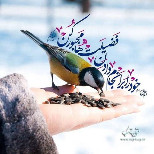 حدیث درباره انجام دادن فضیلت ها از امام علی
