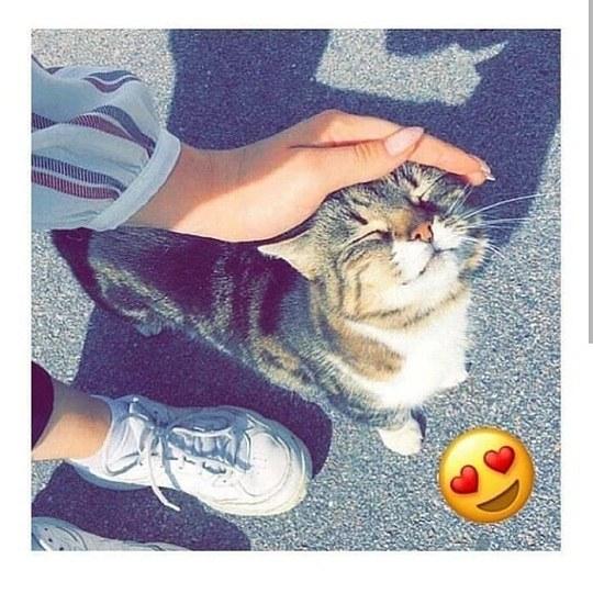 عکس دختری که داره گربه اش را ناز میکنه واسه پروفایل