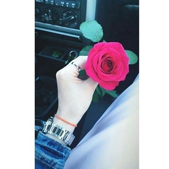 عکس گل رز قرمز و دست واسه پروفایل دخملونه