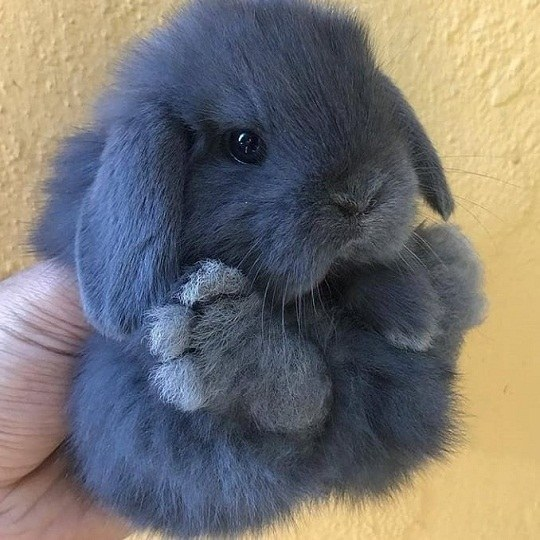 عکس خرگوش نازنازی برای پروفایل دخترانه